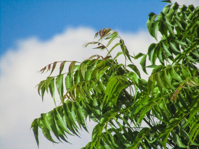 Health Benefits Of Neem Which You Might Not Know.